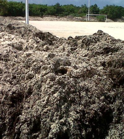 Saca el Gobierno de Borge toneladas de sargazo de las playas de Cancún.. y las tira en un parque público