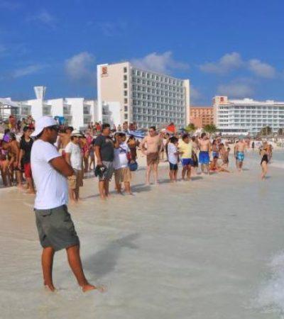 Causan alarma barracudas en playa Gaviota Azul de Cancún: creían eran tiburones