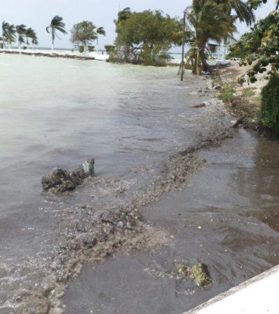 Buscan contener daño en la Bahía de Chetumal tras el derrame de combustible en céntrica gasolinera
