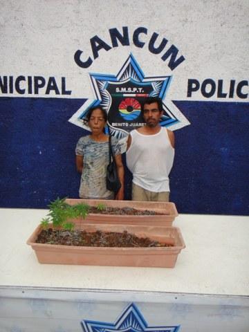 Capturan a una pareja con 2 plantas de marihuana en la Región 224