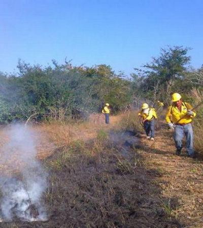 La mayoría de los incendios forestales en QR son provocados, dice la Conafor