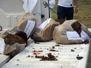 Recalan otros 10 bultos de marihuana cerca de Punta Molas en Cozumel
