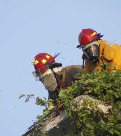 Desalojan hotel Xbalamqué de la Yaxchilán por ataque de abejas africanizadas
