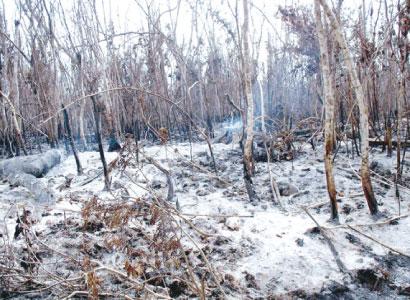 Presenta Conafor 9 denuncias ante Profepa contra pirómanos forestales en QR