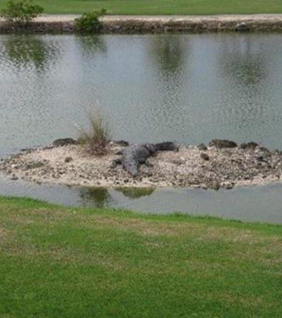 Pierde turista de EU 2 dedos al ser atacado por un cocodrilo en un campo de golf de Cancún