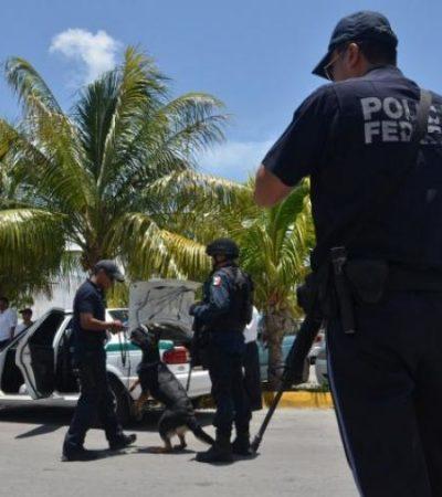 Realizan federales operativo antidroga en el Mercado 28 de Cancún