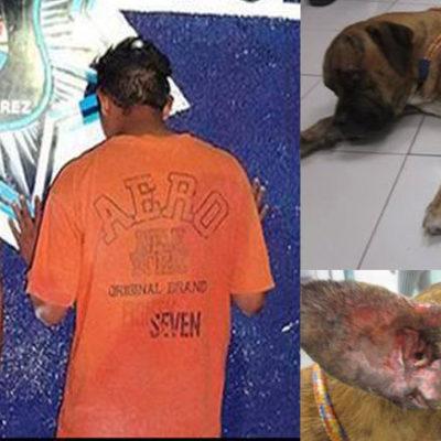 Detienen a 3 jóvenes en Cancún por rociarle thinner a un perro y prenderle fuego