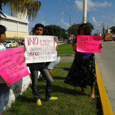 Piden castigo ejemplar y trabajo comunitario para jóvenes que prendieron fuego a un perro en Cancún