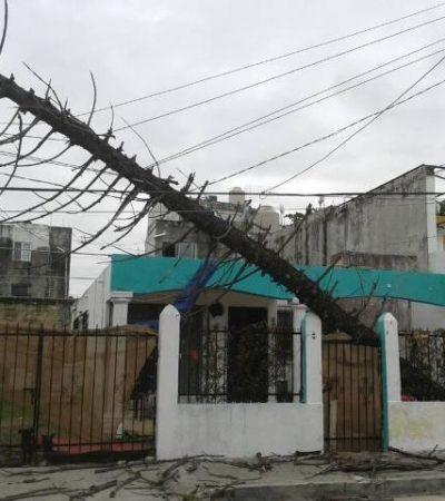 Derriba fuerte viento un poste en la SM 27 de Cancún