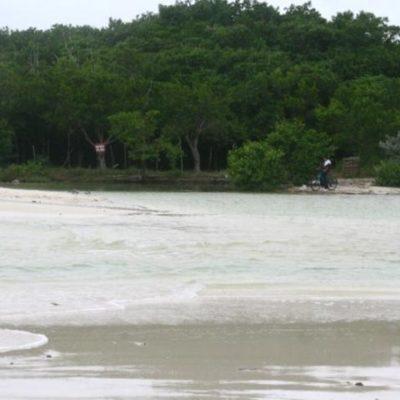 Atribuyen a la devastación del manglar la aparición de cocodrilos en las playas