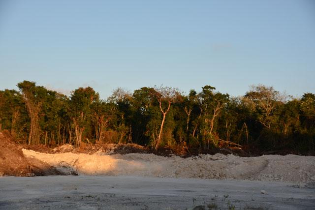 DESPUÉS YA NO TENDRÁ CASO: Urge Citymar a detener devastación de selva por sascabera irregular en Cozumel