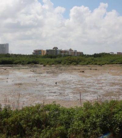 Vuelven a colocar sellos de clausura por relleno de manglar en el desarrollo Puerta del Mar en Cancún