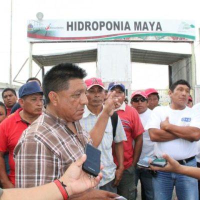 Tras el fracaso de Hidroponia Maya, podrían liquidar a 72 trabajadores