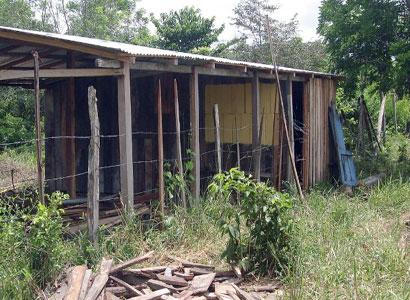 ALARMA ASESINATO EN NICOLÁS BRAVO: Acuchillado y degollado, encuentran el cuerpo de un joven en la Zona Sur de QR