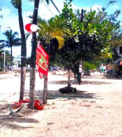 CON ATRASO Y POLÉMICA: Genera críticas la tala de árboles en la remodelación de la Avenida Tulum de Cancún