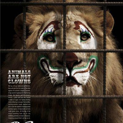 Prohíbe Congreso en Yucatán los circos con animales