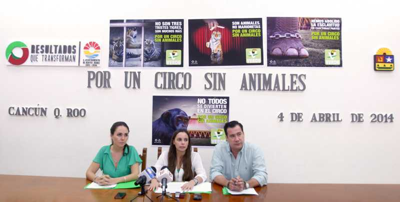Quieren regidores verdes de Cancún prohibir los circos, pero sólo los que usan animales