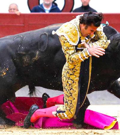TARDE DE TOROS EN LAS VENTAS: Termina en drama y sangre corrida en Madrid cuando los tres toreros fueron corneados