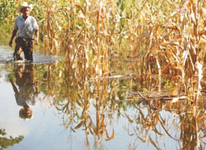 Peligra la zafra en QR por lluvias; dejarían de cosechar 400 mil toneladas de caña