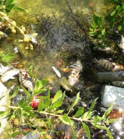 Alarma masiva mortandad de peces en la Salina Grande de Isla Mujeres