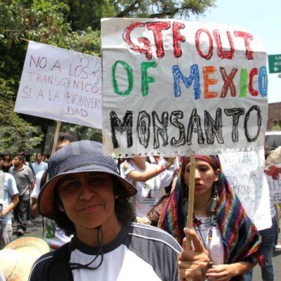REVÉS A MONSANTO EN YUCATÁN: Anula Juzgado permiso que dio Sagarpa para la siembra de soya transgénica