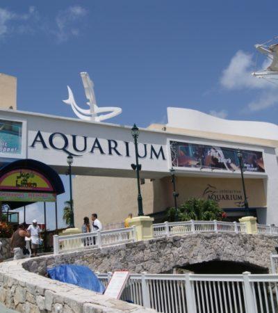 Por 12 mdd, Delphinus adquiere el Aquarium de plaza La Isla en Cancún