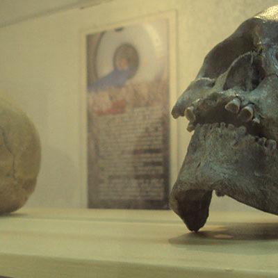 EXPOSICIÓN ITINERANTE: Exhibirán en Cancún hasta octubre restos de algunos de los primeros hombres hallados en México