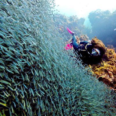 En 50 años, los arrecifes en el Caribe han disminuido 50% y el deterioro sigue, advierten