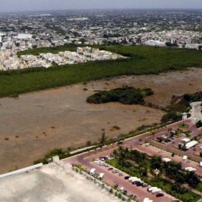 ECOCIDIO IMPUNE: Pese a las denuncias, nada ha hecho Profepa para detener devastación de manglar de Puerto Cancún y Puerta del Mar