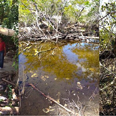 MULTA PROFEPA AL 'DRAGON MART': Por incumplir normatividad ambiental, imponen sanción de más de 7 mdp
