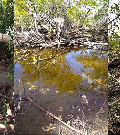 Critica PRD a Profepa y Semarnat por solapar daños ambientales; el 'Dragon Mart' no es el único caso, dice