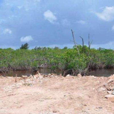 Impone comuna multa de 3 mdp a complejo Grand Coral, exhibido por rellenar manglar