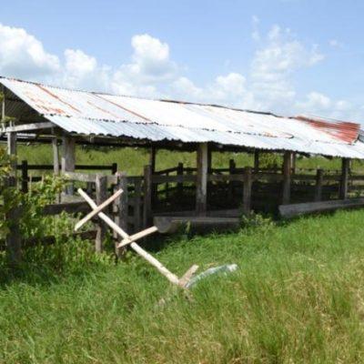 Advierten declive de la ganadería en el sur de QR