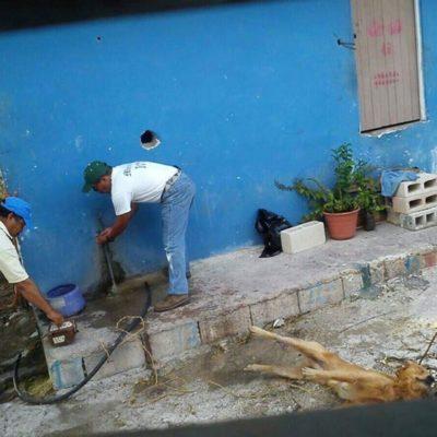 CAEN FUNCIONARIOS POR MATAR A PERRO: 'Renuncia' directora de Ecología de IM y 3 trabajadores por electrocutar a 'Lucky'