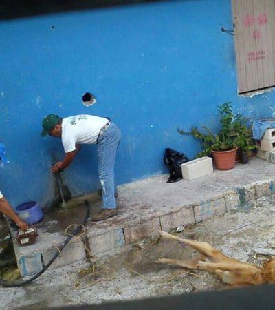Presentan ciudadanos denuncia contra funcionarios municipales de IM por dar muerte al perro 'Lucky' por la vía de la electrocutación