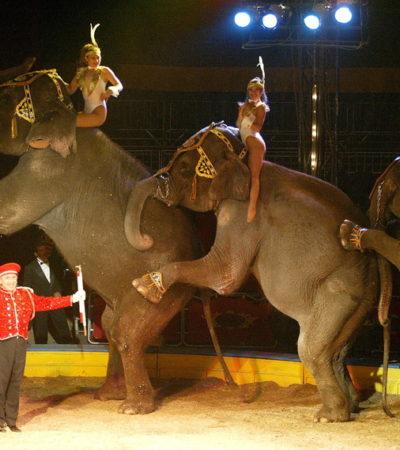 Aprueba Congreso prohibir uso de animales en circos en todo México