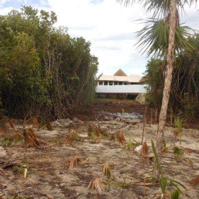 Anuncian multa de 4.5 mdp al hotel Paradisus por devastar manglar en Playa del Carmen
