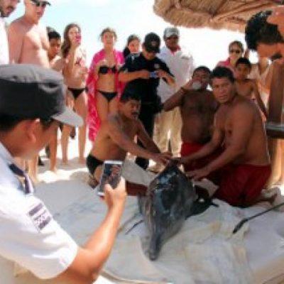 Rescatan a delfín varado en Playa Marlin y lo envían a Dolphin Discovery