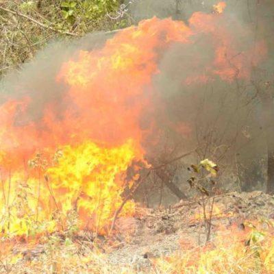 Consume incendio forestal 40 hectáreas en Solidaridad