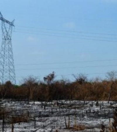 COMO AGUA DE MAYO: Con la ayuda de las lluvias, se apagan y controlan incendios forestales en el centro y sur de QR