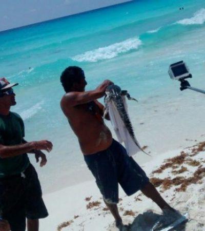 Espanta a bañistas un pequeño cocodrilo en playa Delfines