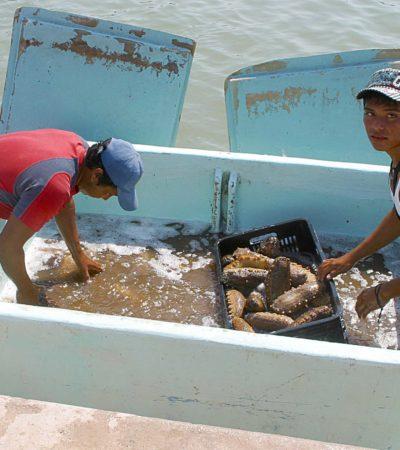 PESQUERÍA MORTAL: Documentan 100 descompresionados, hasta 20 muertos, violencia y conflictos por la extracción del pepino de mar en Yucatán