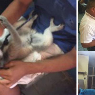 Asegura Profepa un lémur y un mono ardilla en las afueras del Centro Artesanal Tulum