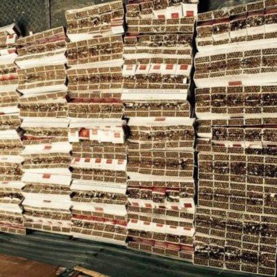 MILLONARIO DECOMISO AL SUR DE QR: Aseguran cargamento de más de 22 millones de cigarillos con valor de 15.5 mdp
