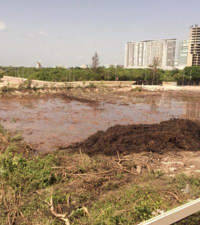 Confirman multa de 6 mdp a empresa Bi&Di por devastación del Malecón Tajamar en el 2015