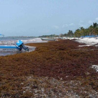 Acumulación de sargazo en playas de la Riviera Maya pega a la actividad turística