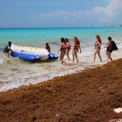 Urgen hoteleros a encontrar una solución al problema del sargazo en playas de Quintana Roo