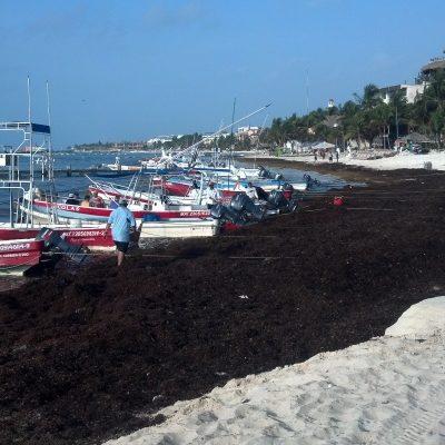 DESCARTAN CANCELACIONES POR CONTINGENCIA: Luchan en la Riviera Maya para mantener a raya las oleadas de sargazo