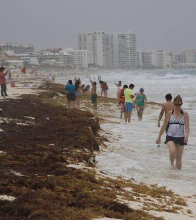 Reportan náuticos de Cancún pérdidas de hasta 300 mil dólares en una semana por sargazo