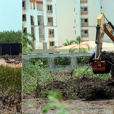 DEVASTACIÓN CONTRA RELOJ EN MALECÓN TAJAMAR: Presentan 7 denuncias contra desmonte de manglar para proyectos inmobiliarios en Cancún